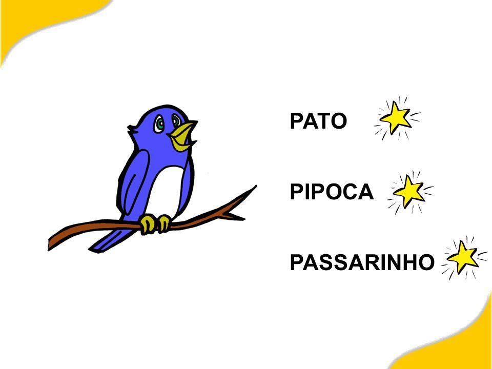 PATO PIPOCA PASSARINHO