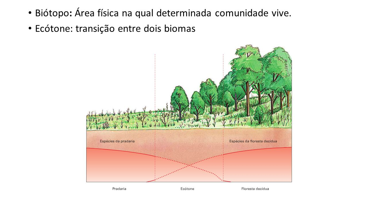 Biótopo: Área física na qual determinada comunidade vive.