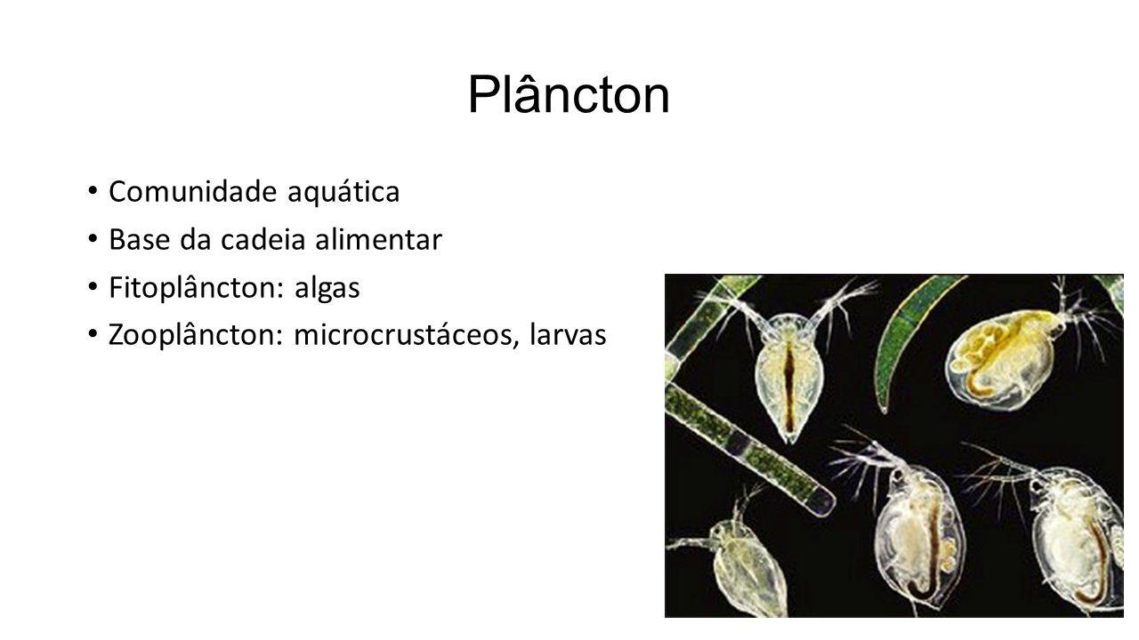 Plâncton Comunidade aquática Base da cadeia alimentar