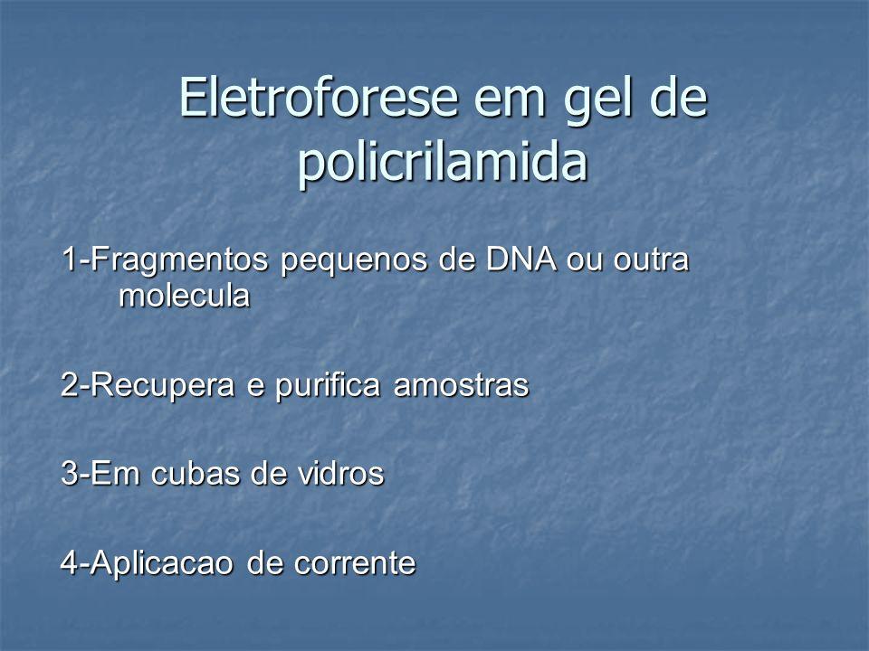 Eletroforese em gel de policrilamida