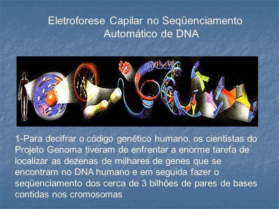 Eletroforese Capilar no Seqüenciamento Automático de DNA