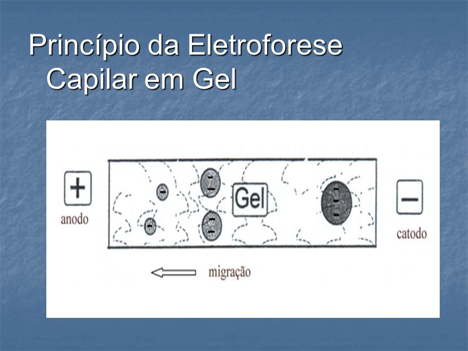 Princípio da Eletroforese Capilar em Gel