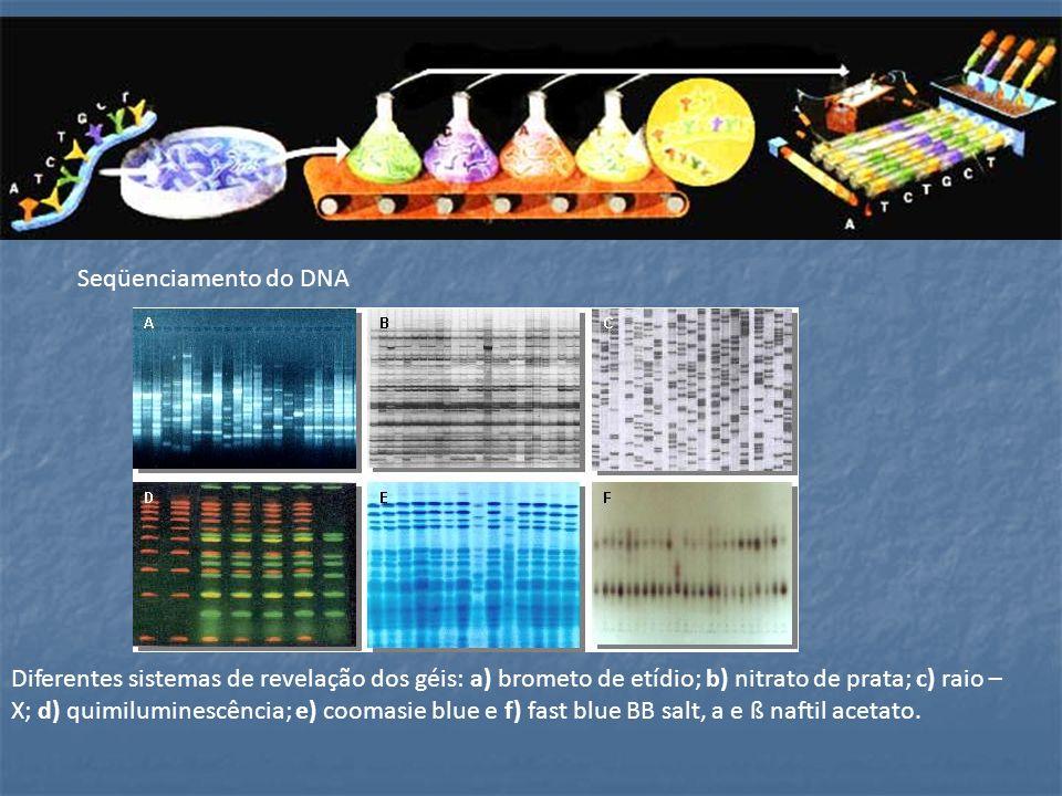 Seqüenciamento do DNA