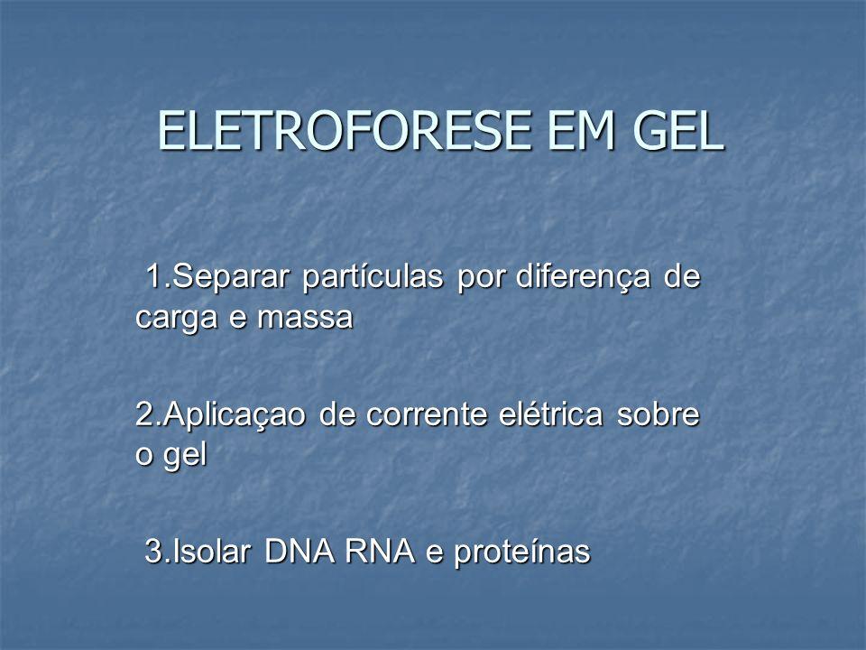 ELETROFORESE EM GEL 1.Separar partículas por diferença de carga e massa. 2.Aplicaçao de corrente elétrica sobre o gel.