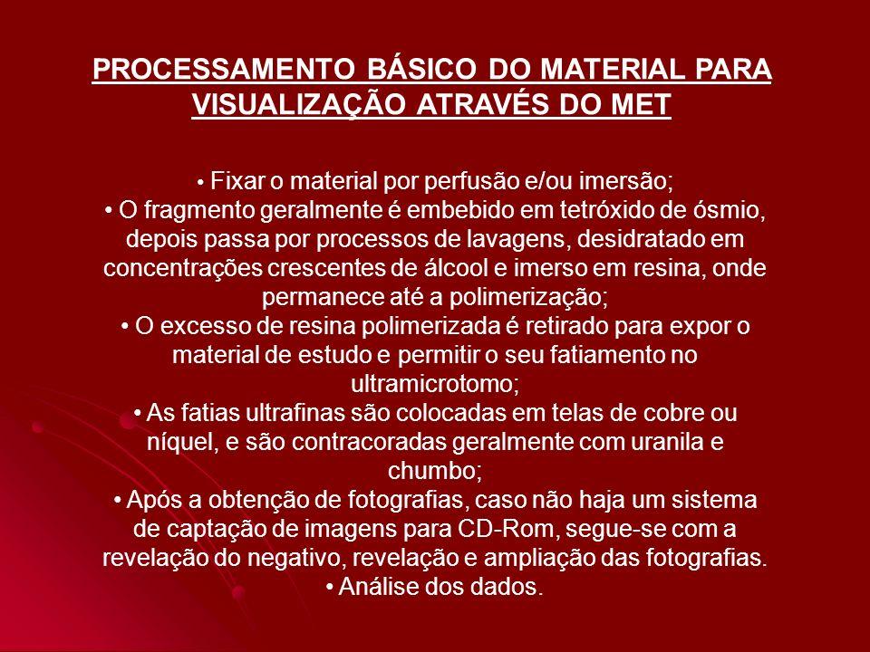 PROCESSAMENTO BÁSICO DO MATERIAL PARA VISUALIZAÇÃO ATRAVÉS DO MET