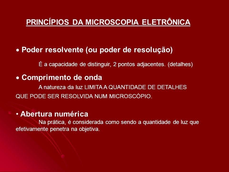 PRINCÍPIOS DA MICROSCOPIA ELETRÔNICA