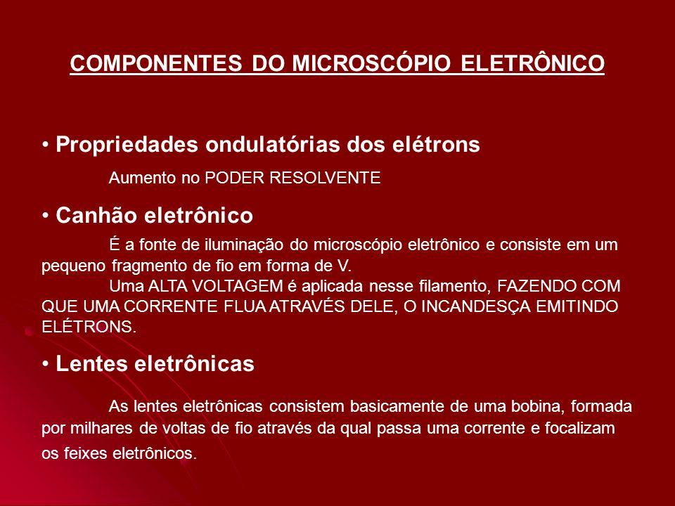 COMPONENTES DO MICROSCÓPIO ELETRÔNICO
