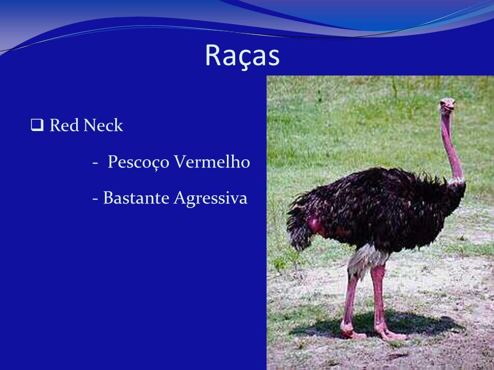 Raças Red Neck - Pescoço Vermelho - Bastante Agressiva