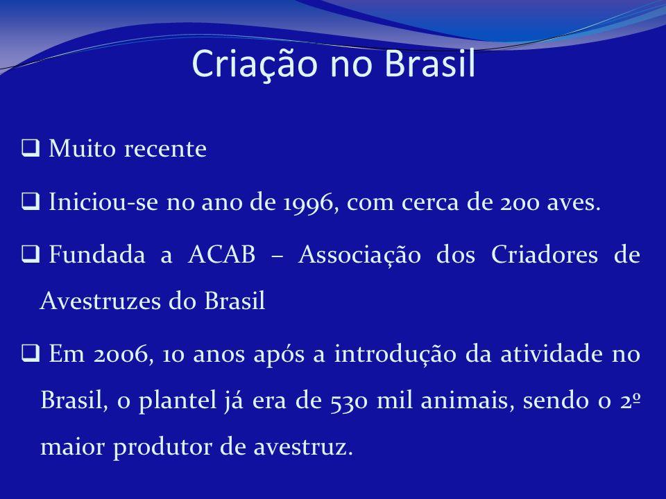 Criação no Brasil Muito recente