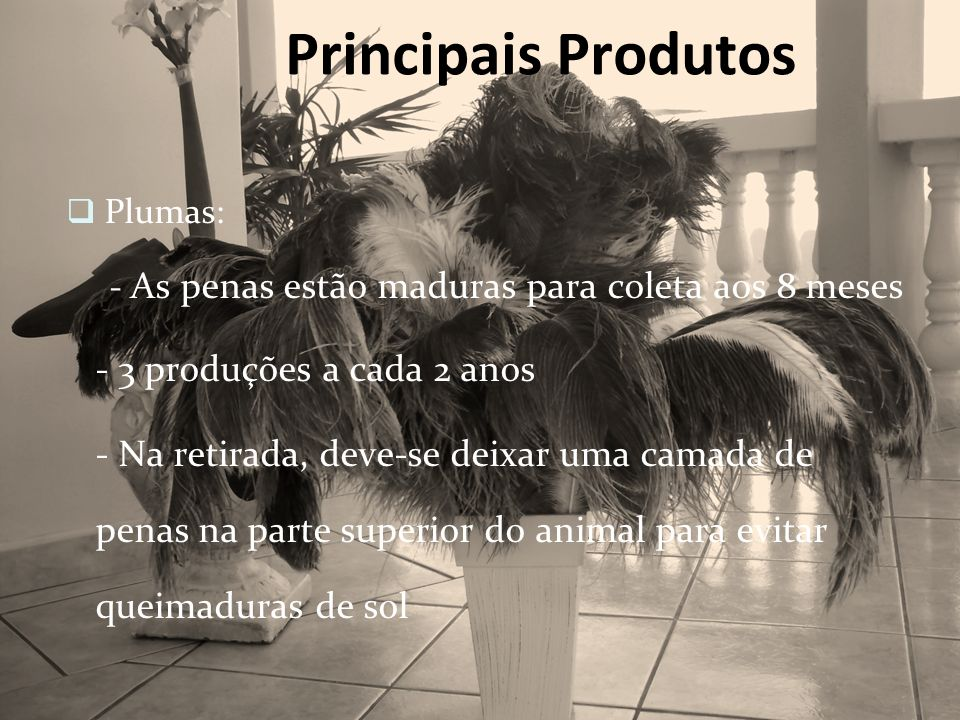 Principais Produtos - 3 produções a cada 2 anos