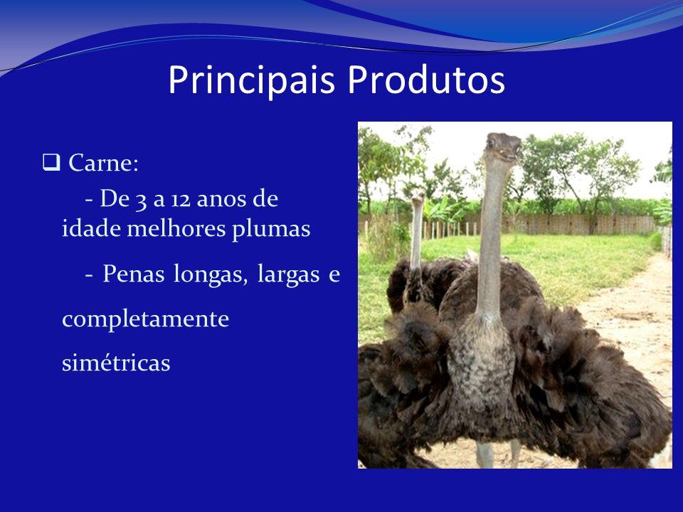 Principais Produtos Carne: - De 3 a 12 anos de idade melhores plumas