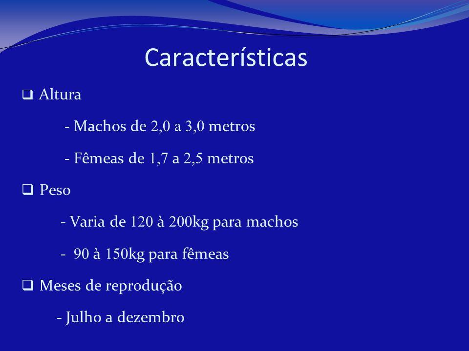 Características - Machos de 2,0 a 3,0 metros