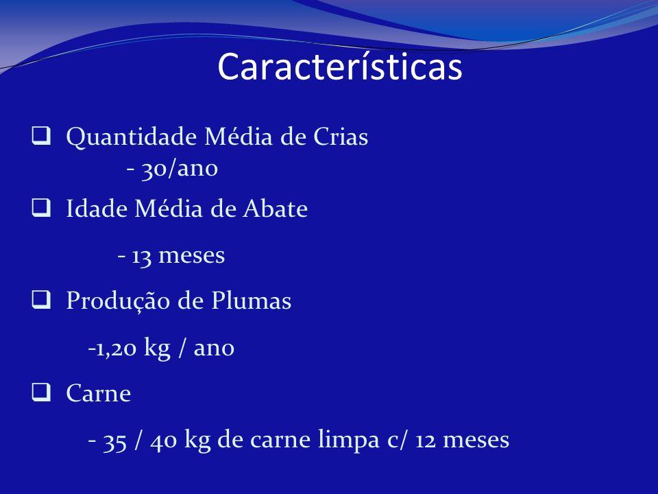 Características Quantidade Média de Crias - 30/ano