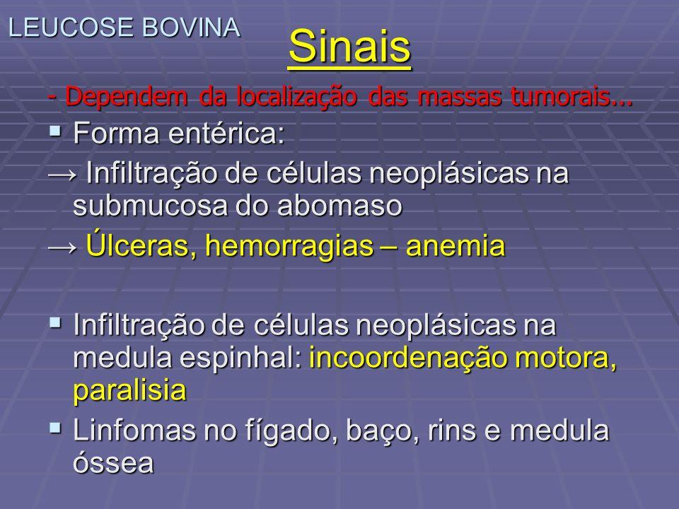 Sinais Forma entérica: