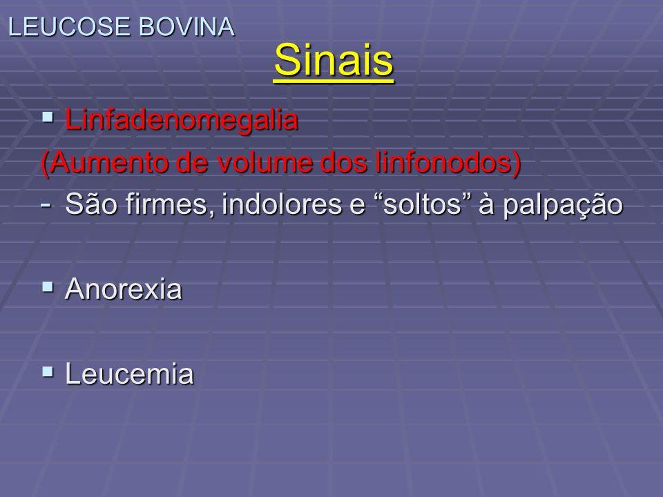 Sinais Linfadenomegalia (Aumento de volume dos linfonodos)
