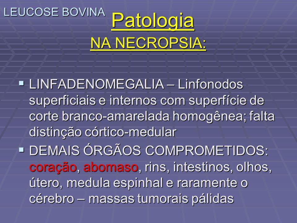 Patologia NA NECROPSIA: