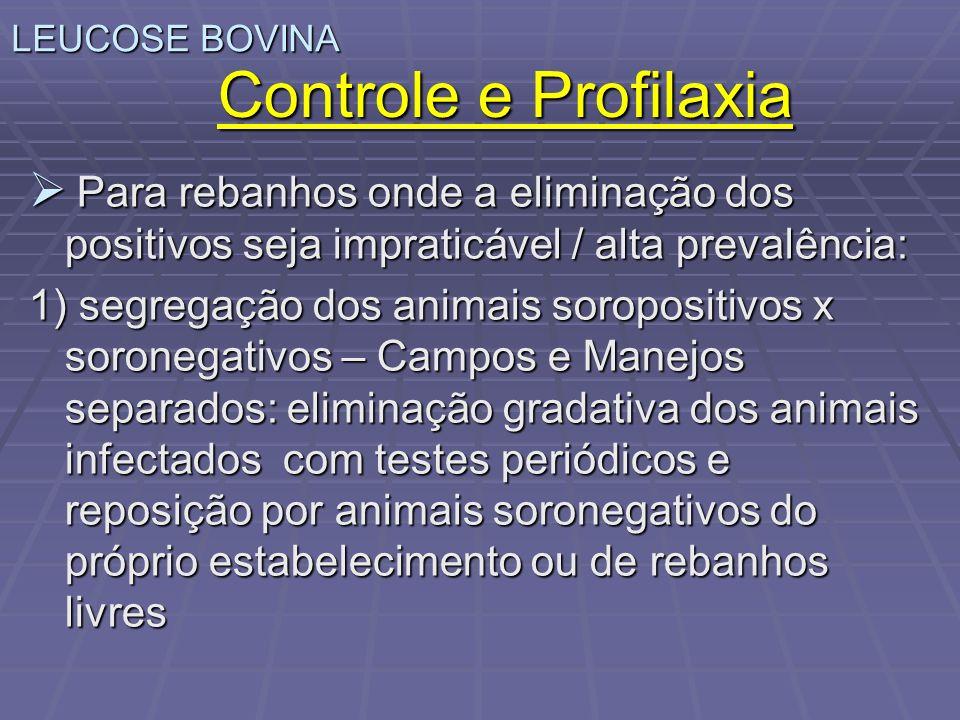 LEUCOSE BOVINA Controle e Profilaxia. Para rebanhos onde a eliminação dos positivos seja impraticável / alta prevalência: