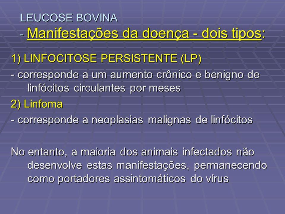 LEUCOSE BOVINA - Manifestações da doença - dois tipos: