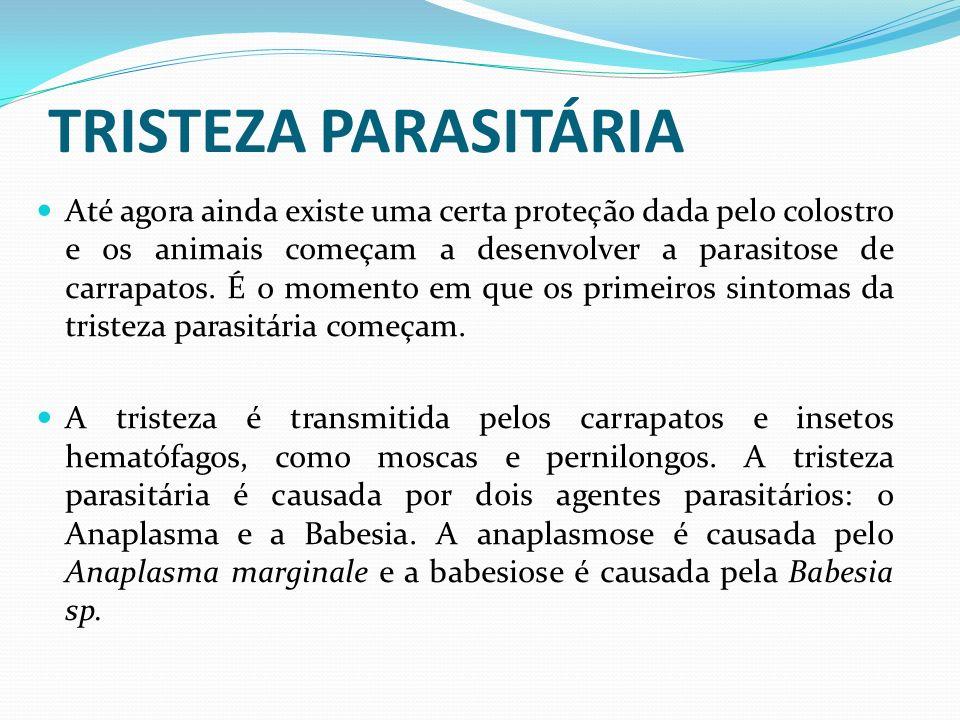 TRISTEZA PARASITÁRIA