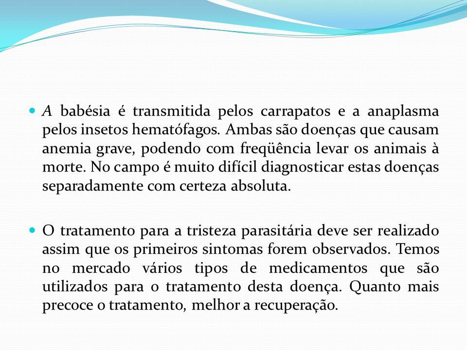 A babésia é transmitida pelos carrapatos e a anaplasma pelos insetos hematófagos. Ambas são doenças que causam anemia grave, podendo com freqüência levar os animais à morte. No campo é muito difícil diagnosticar estas doenças separadamente com certeza absoluta.