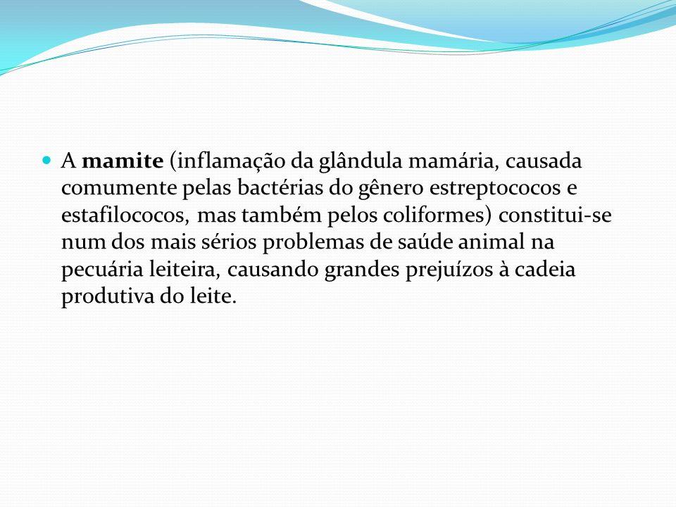 A mamite (inflamação da glândula mamária, causada comumente pelas bactérias do gênero estreptococos e estafilococos, mas também pelos coliformes) constitui-se num dos mais sérios problemas de saúde animal na pecuária leiteira, causando grandes prejuízos à cadeia produtiva do leite.