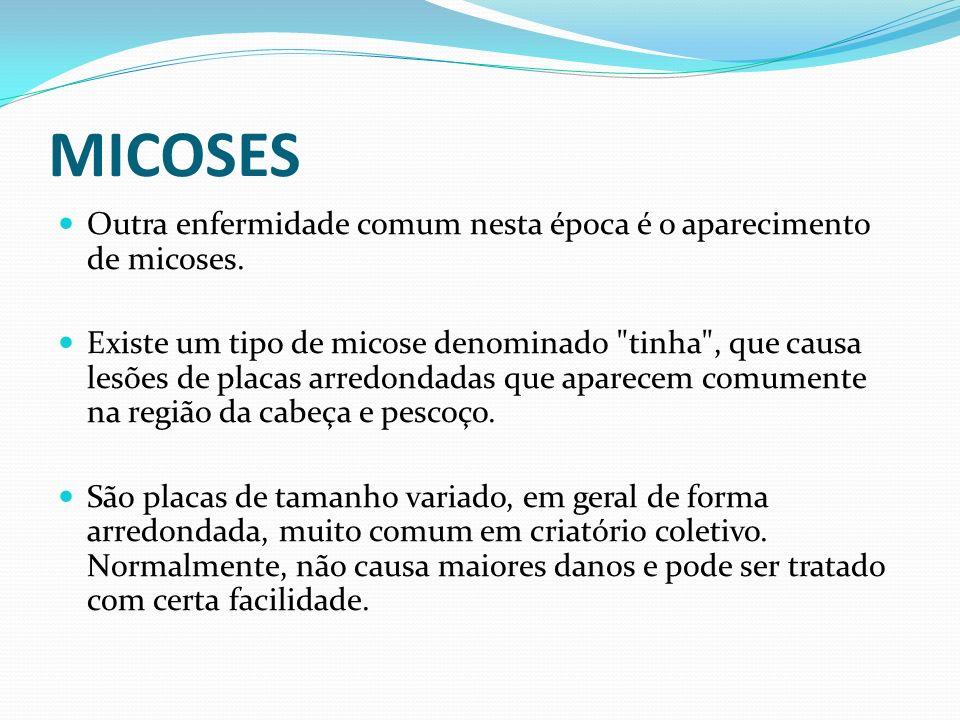 MICOSESOutra enfermidade comum nesta época é o aparecimento de micoses.