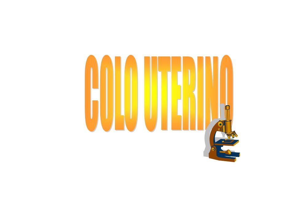 COLO UTERINO
