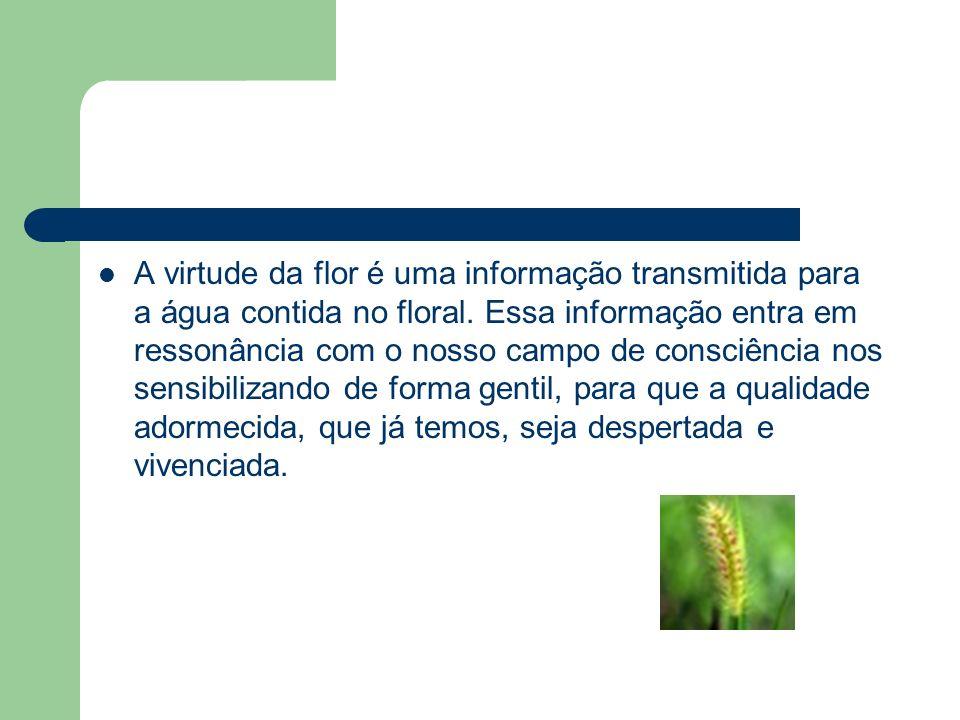 A virtude da flor é uma informação transmitida para a água contida no floral.
