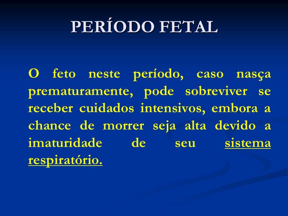 PERÍODO FETAL