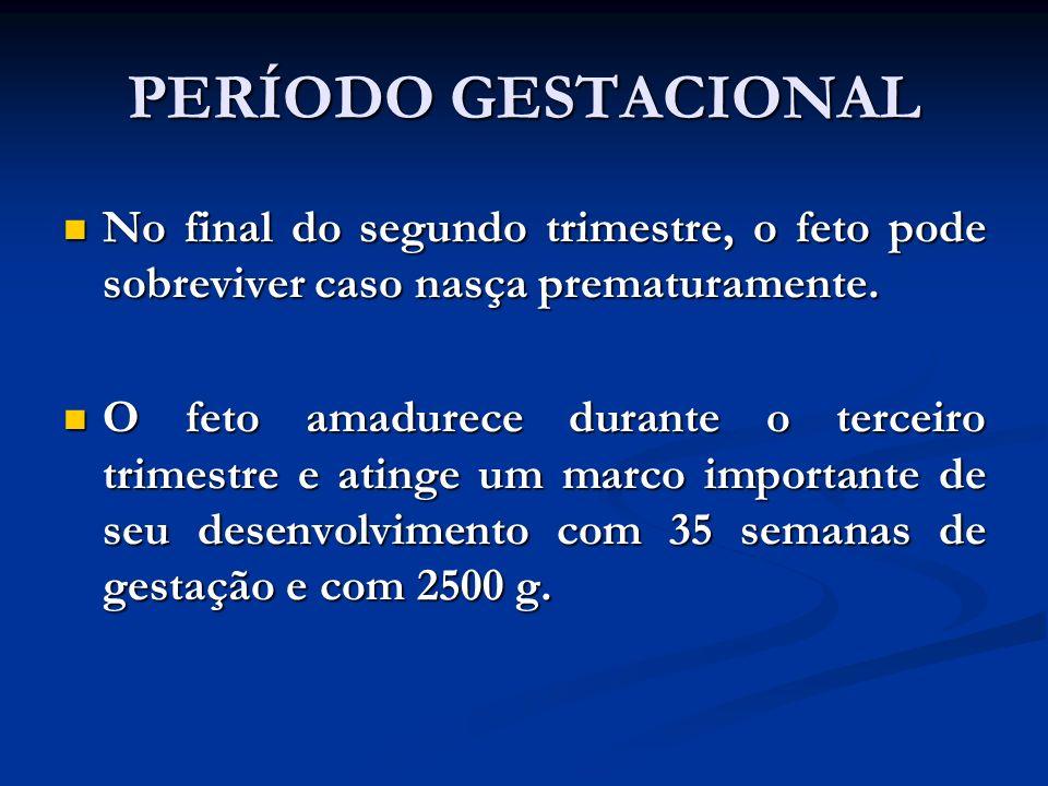 PERÍODO GESTACIONAL No final do segundo trimestre, o feto pode sobreviver caso nasça prematuramente.