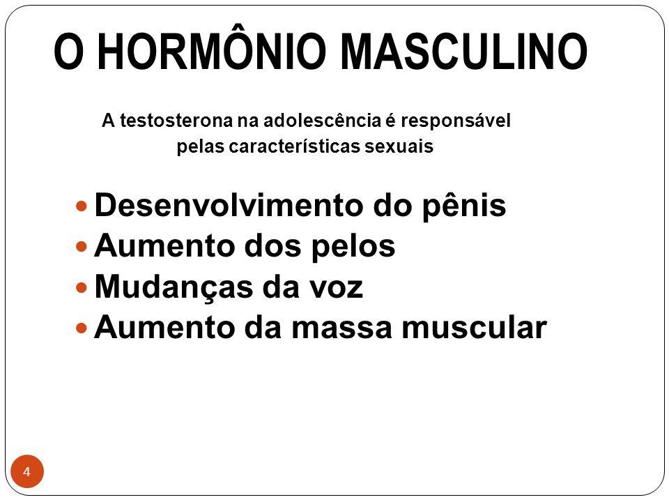 O HORMÔNIO MASCULINO Desenvolvimento do pênis Aumento dos pelos