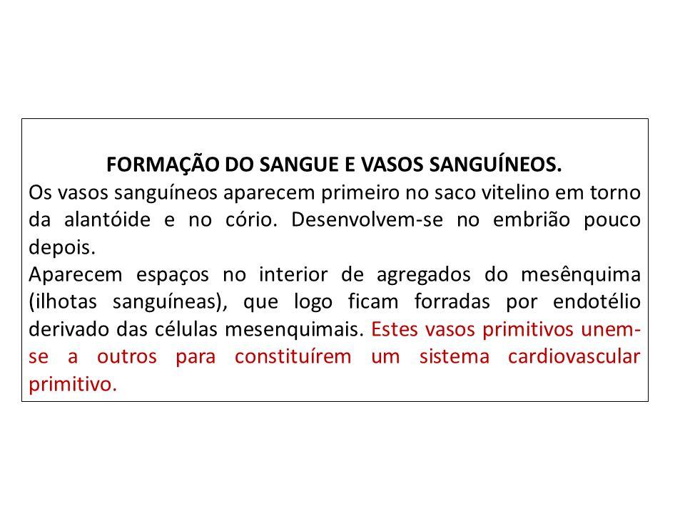 FORMAÇÃO DO SANGUE E VASOS SANGUÍNEOS.