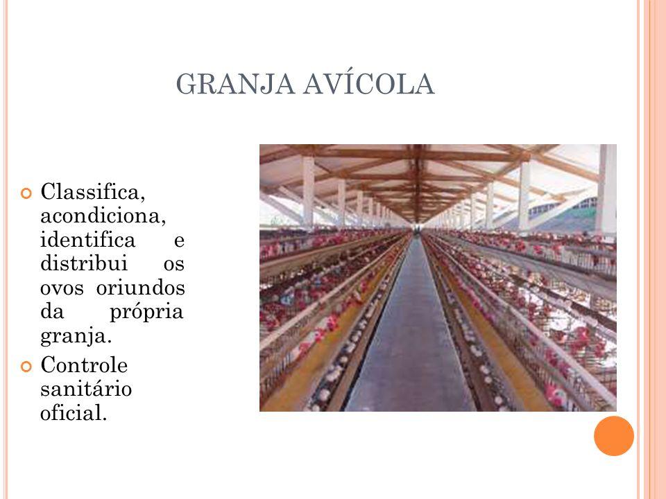 GRANJA AVÍCOLA Classifica, acondiciona, identifica e distribui os ovos oriundos da própria granja.