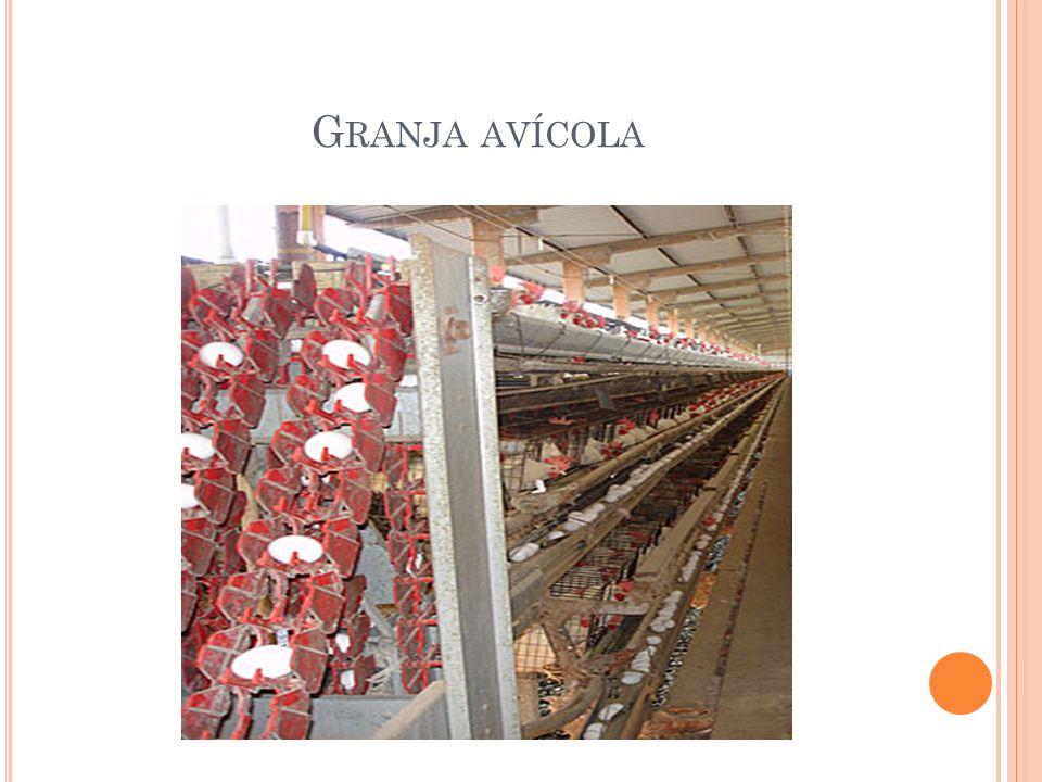 Granja avícola