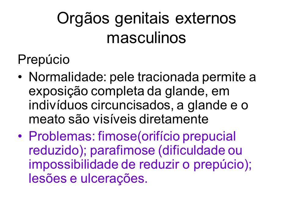 Orgãos genitais externos masculinos