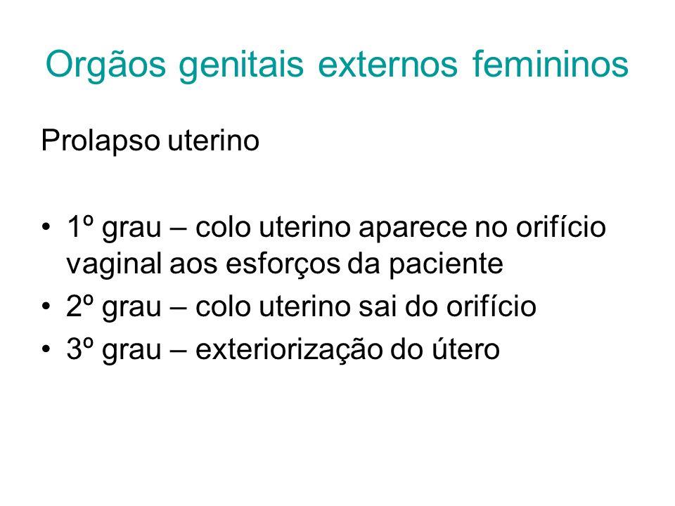 Orgãos genitais externos femininos