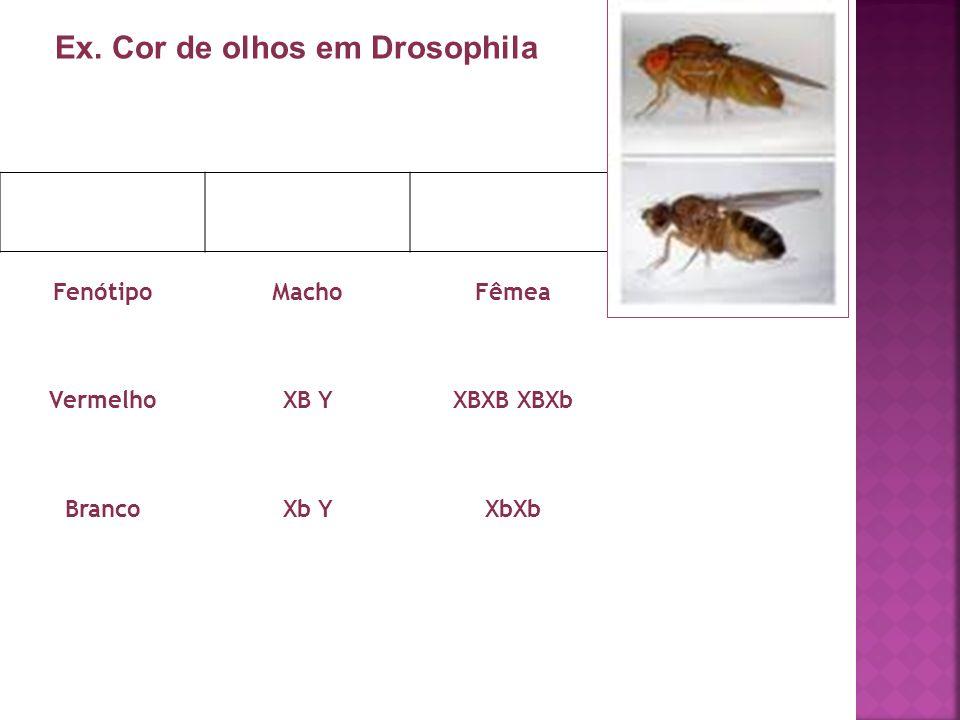 Ex. Cor de olhos em Drosophila