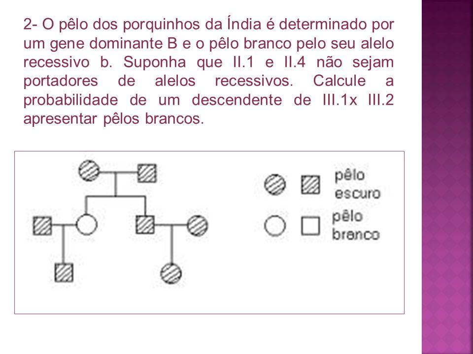 2- O pêlo dos porquinhos da Índia é determinado por um gene dominante B e o pêlo branco pelo seu alelo recessivo b.