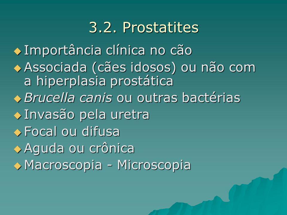 3.2. Prostatites Importância clínica no cão