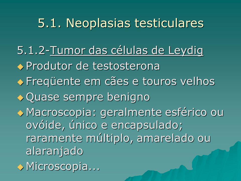 5.1. Neoplasias testiculares
