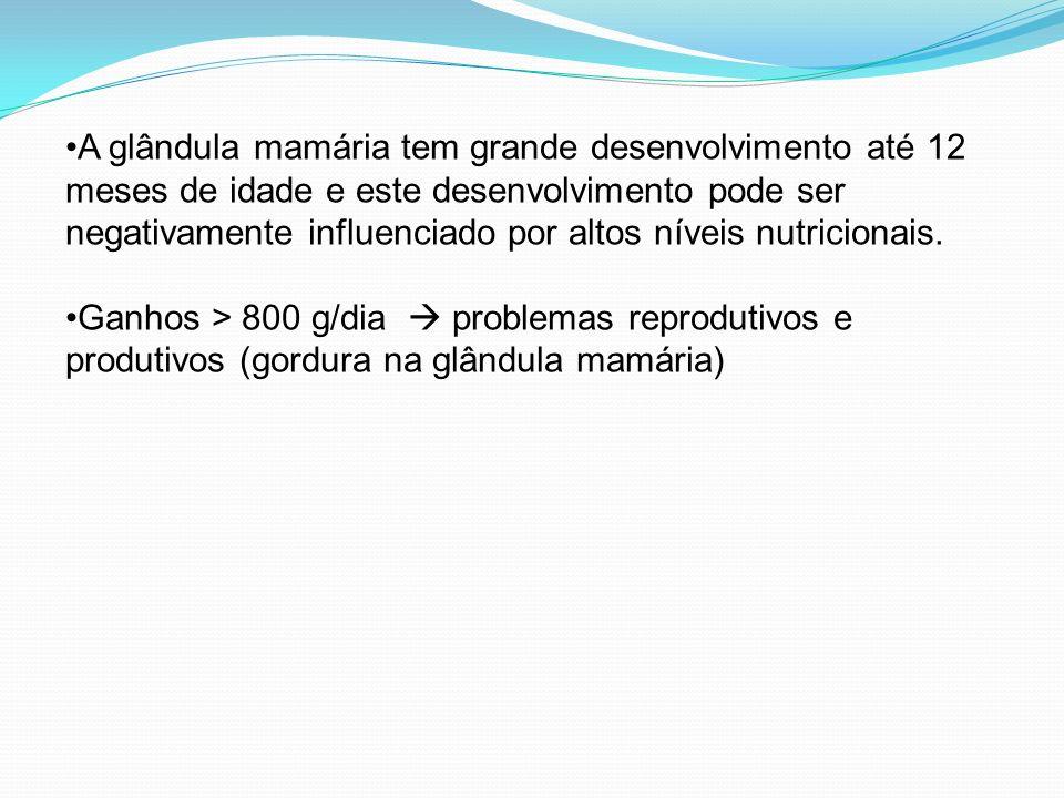 A glândula mamária tem grande desenvolvimento até 12 meses de idade e este desenvolvimento pode ser negativamente influenciado por altos níveis nutricionais.