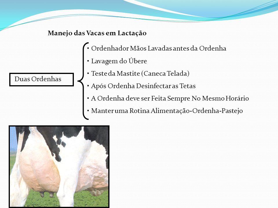 Manejo das Vacas em Lactação