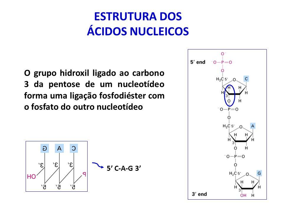 ESTRUTURA DOS ÁCIDOS NUCLEICOS