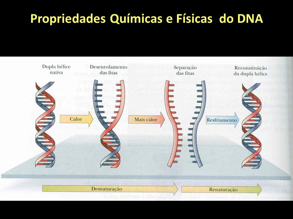 Propriedades Químicas e Físicas do DNA