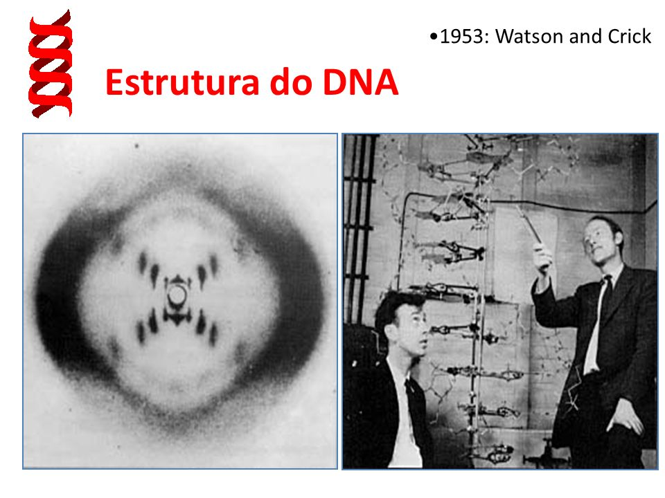 1953: Watson and Crick Estrutura do DNA