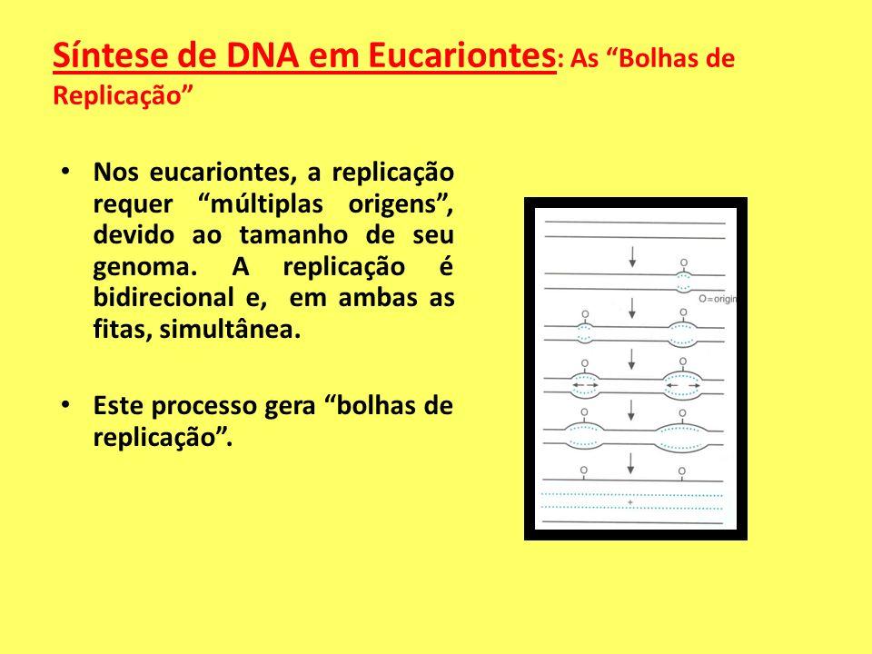 Síntese de DNA em Eucariontes: As Bolhas de Replicação