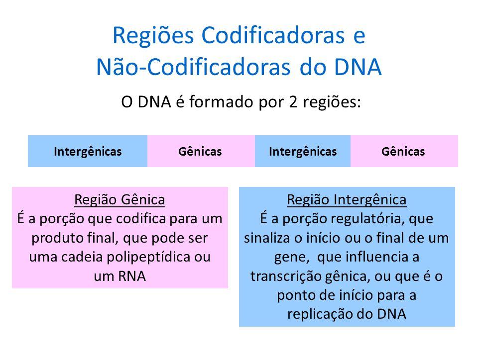 Regiões Codificadoras e Não-Codificadoras do DNA