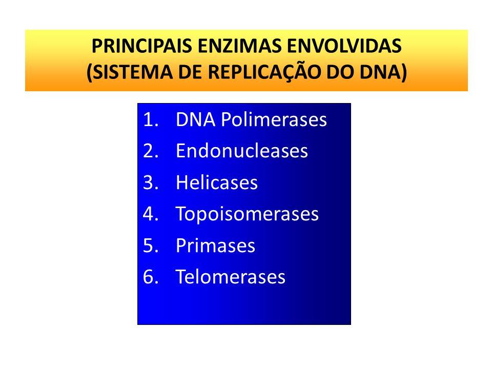 PRINCIPAIS ENZIMAS ENVOLVIDAS (SISTEMA DE REPLICAÇÃO DO DNA)