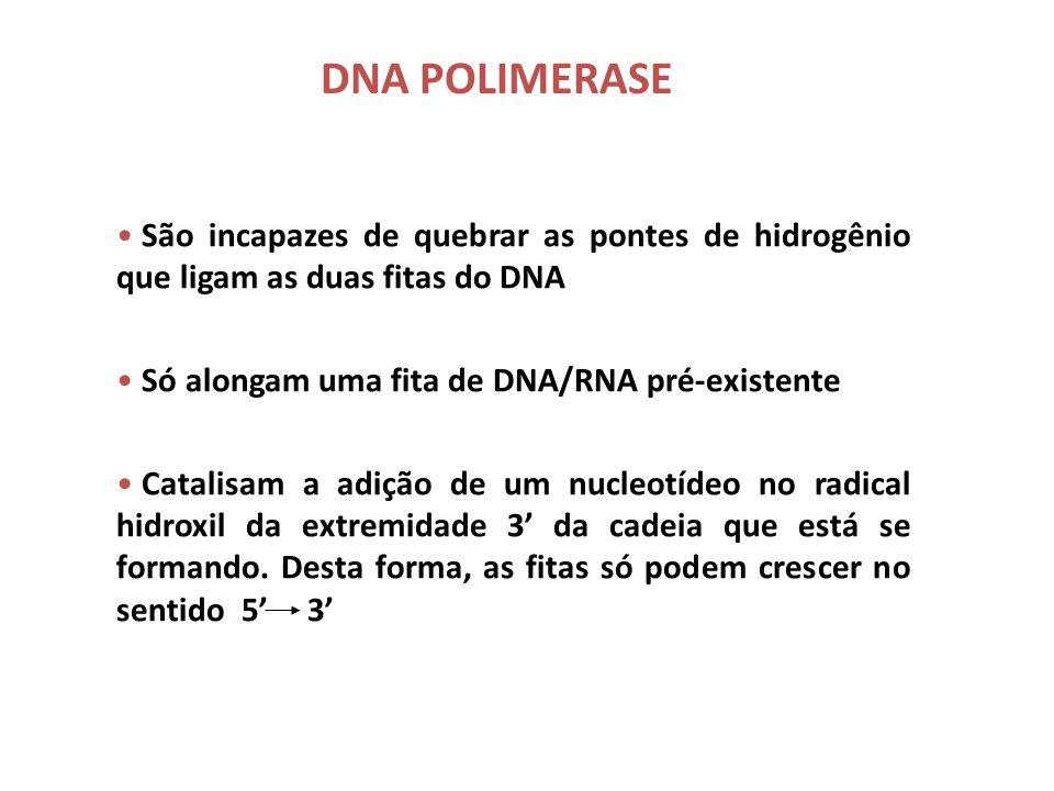 DNA POLIMERASE São incapazes de quebrar as pontes de hidrogênio que ligam as duas fitas do DNA. Só alongam uma fita de DNA/RNA pré-existente.