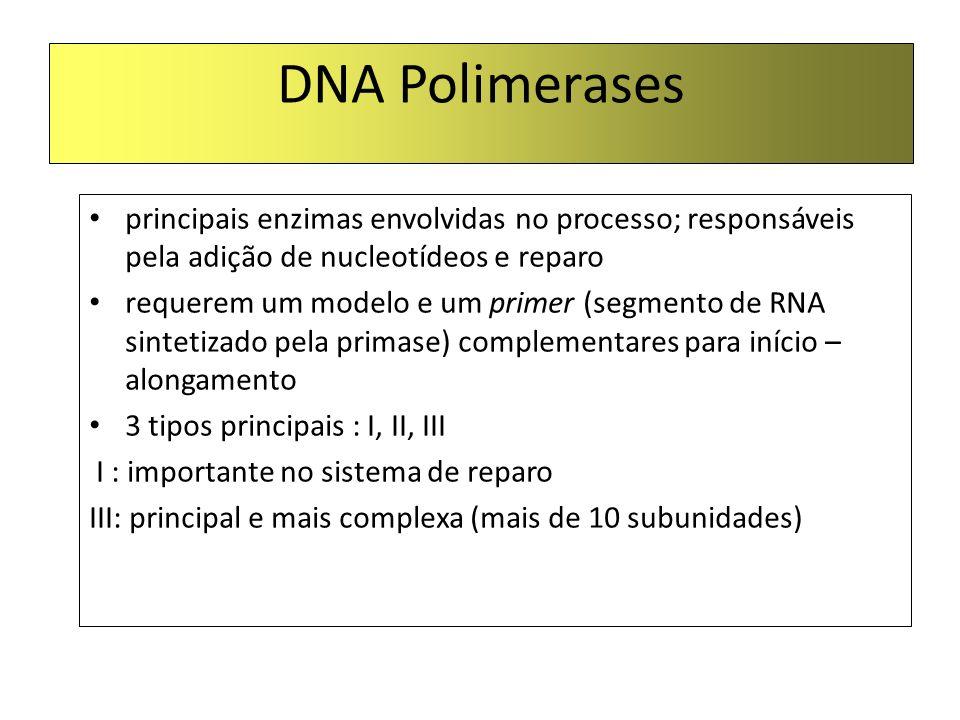 DNA Polimerases principais enzimas envolvidas no processo; responsáveis pela adição de nucleotídeos e reparo.
